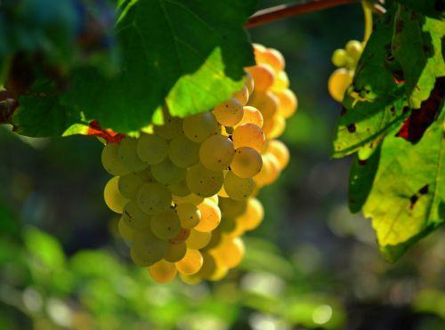 BeFunky_grapes.jpg