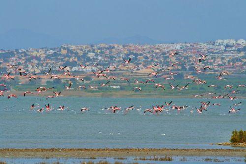 BeFunky_flamingos.jpg