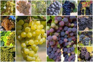 grapesbefunky.jpg